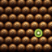 Sliced kiwi fruit standing out between a group of hole kiwi's