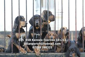 025__KSB_Kennels_Exercise_161212