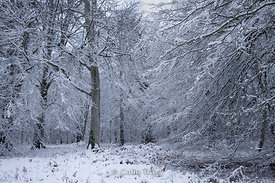 Snowfall, New Forest, UK