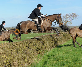 Jeremy Dale jumping a hedge at Mrs Greenall's covert