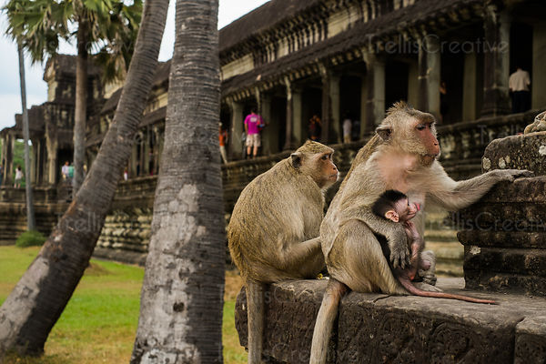 Monkeys sitting on the carved stone staircase outside Angkor Wat