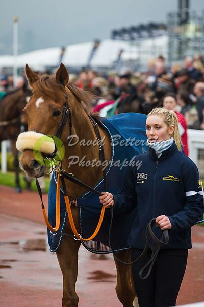 Cheltenham_Gold_Cup_Day_2015_-162