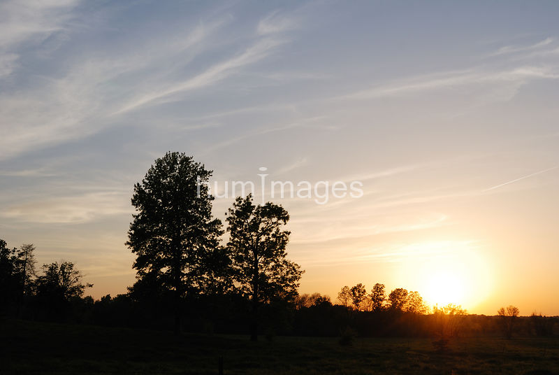 Silhouette of a grove of trees at sunset (sun in image)