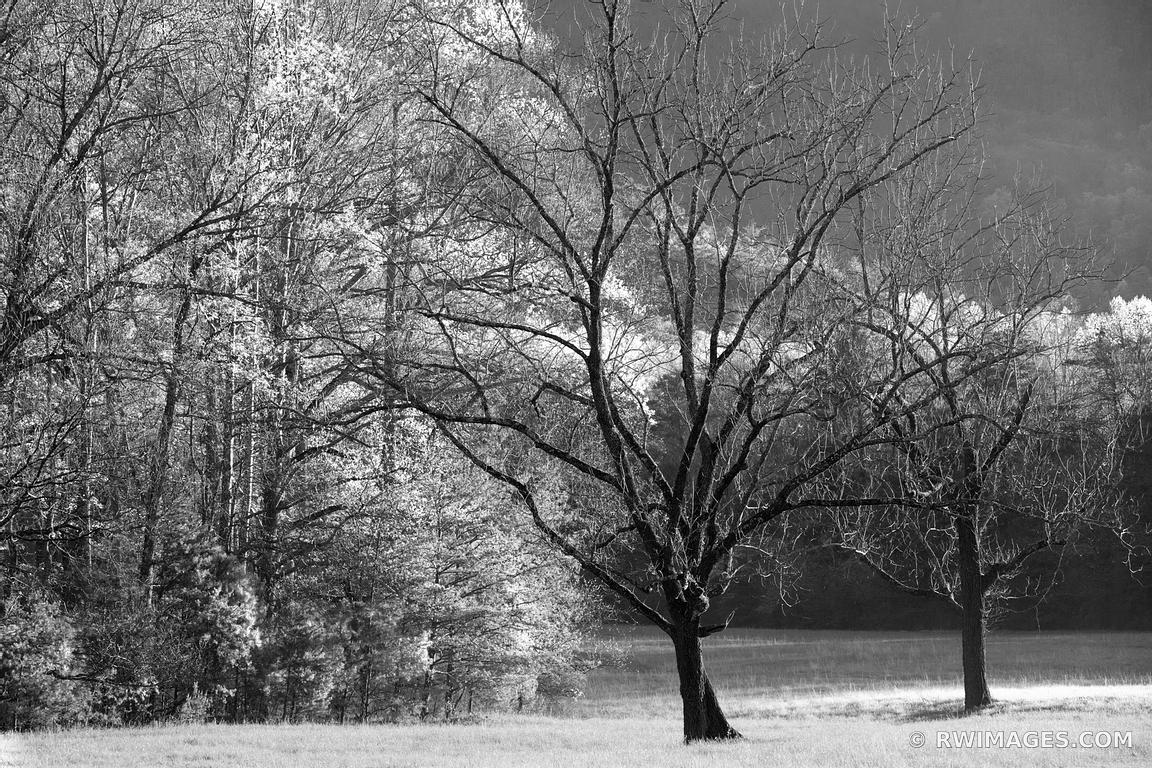 CADES COVE SMOKY MOUNTAINS BLACK AND WHITE