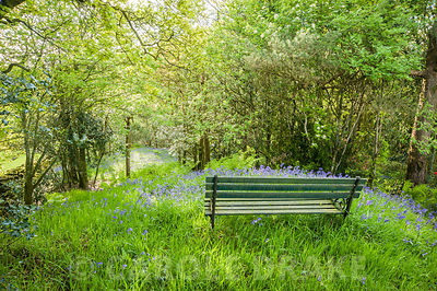 Seat in bluebells in the woodland at the top of the garden. Windy Hall, Windermere, Cumbria, UK