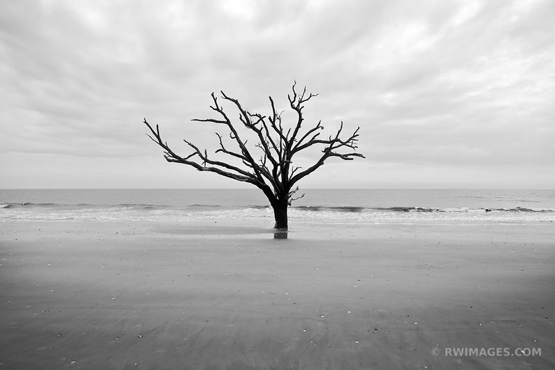 BONEYARD BEACH BOTANY BAY EDISTO ISLAND BLACK AND WHITE