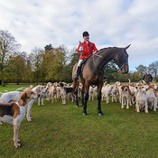 Fitzwilliam Hunt photos