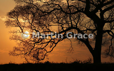 Riverside tree at sunset, River Pixaim, North Pantanal, Mato Grosso, Brazil