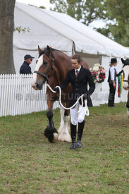 HOY_220314_Clydesdales_2357