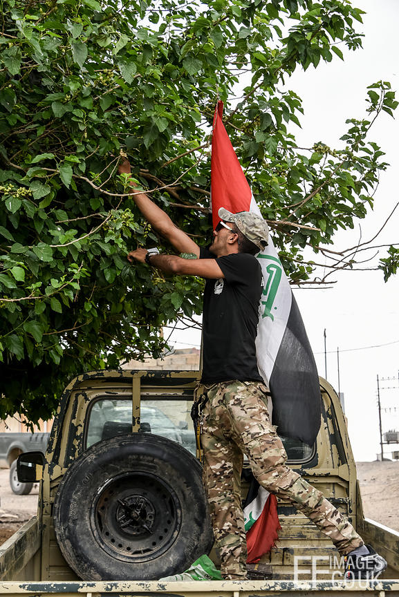 An Iraqi Army Soldier stands in the back of his ute to pick Mulberries in the village of badush, near Mosul. Things Soldiers like to do in their spare time...