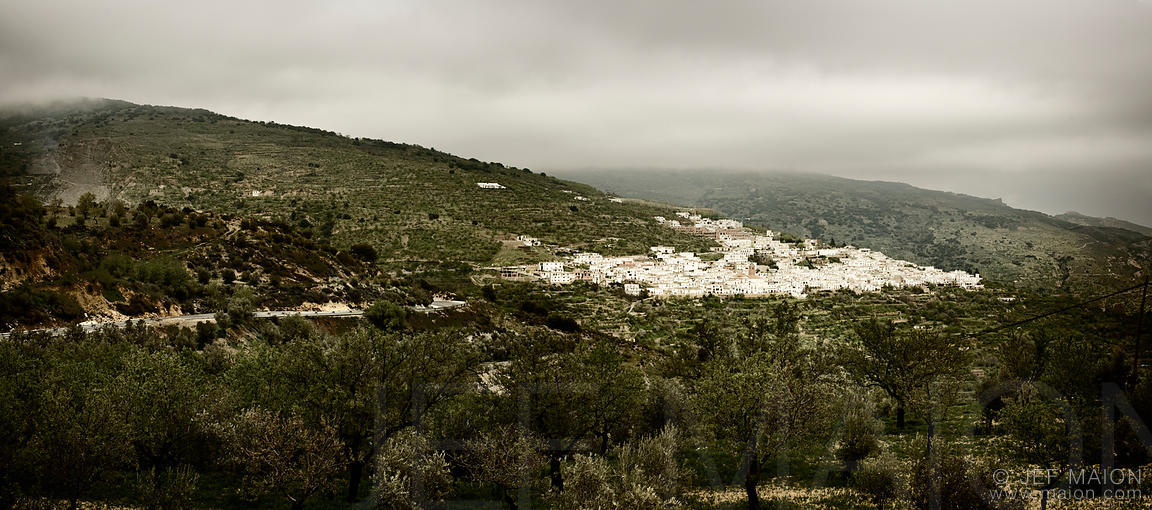 White Andalucian village and olive trees