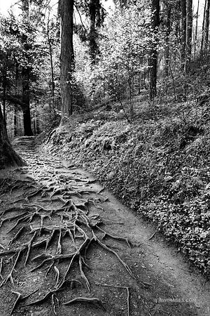 GROTTO FALLS TRAIL SMOKY MOUNTAINS NATIONAL PARK BLACK AND WHITE