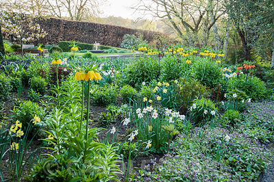 Bed in the Canal Garden is full of crown imperials, Fritillaria imperialis, narcissi and pulmonarias, with water feature glimpsed beyond, the focal point of Sybil's Garden, designed by Alistair Baldwin in 2005. York Gate Garden, Adel, Leeds, Yorkshire
