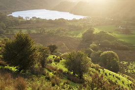 Golden Light, Llyn Gwynant, Snowdonia