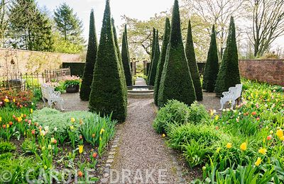 The Well Garden features tall yew spires around a central limestone wellhead. Wollerton Old Hall, Hodnet, Market Drayton, Shropshire, UK