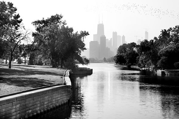 LINCOLN PARK CHICAGO BLACK AND WHITE