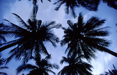 Palm trees and sky on the island of Koh Pangan, Thailand