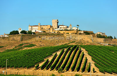 Vineyards and the walled city of Estremoz. Alentejo, Portugal