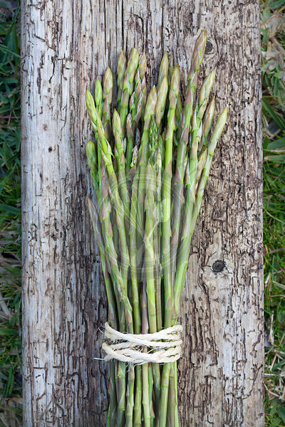 Mallorcan grown wild asparagus with rustic wood on grass