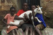 Young children holding goat in hands Uganda Africa