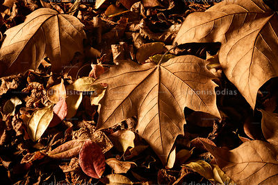 Dried autumn leaves on the ground