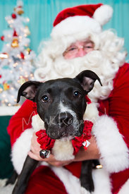 Santa Claus Holding Black and White Pitbull Puppy