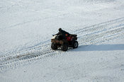 Farmer on quad ATV bike pouring feed out for sheep in snow, North Yorkshire.