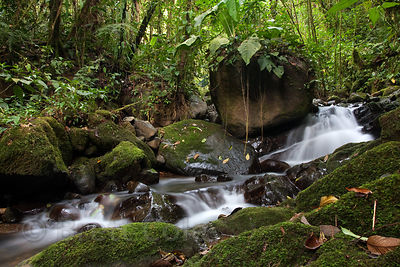 Mossy boulder in a tributary to the Rio Penas Blancas, Las Nubes, Costa Rica