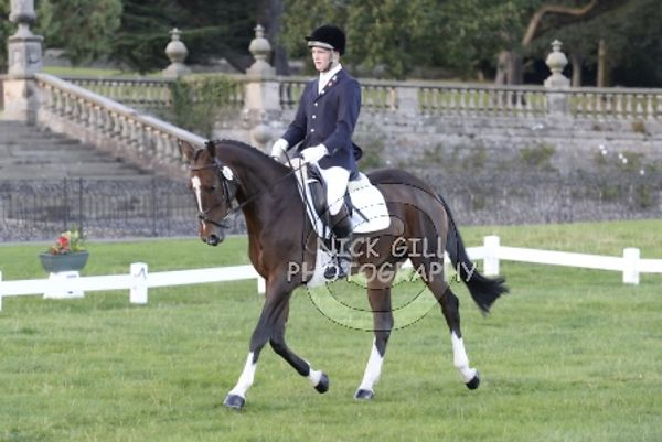 Dressage 1700-1800 photos