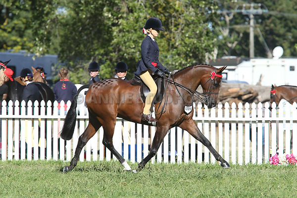 Summit Grains & Saddlery Show POY Over 138cm & under 148cm photos