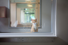 Orange and White Kitten on Window Sill in Shelter