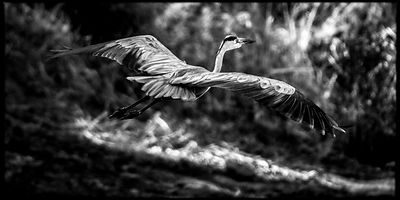 5688-Bird_Laurent_Baheux