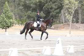 SI_Festival_of_Dressage_310115_Level_1_Champ_0684