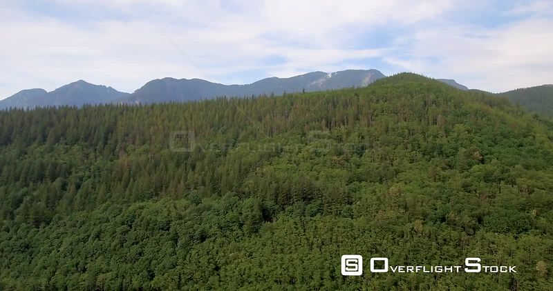 Forward gliding view of endless forest and towering mountains, bathed in emerald greens and deep blues