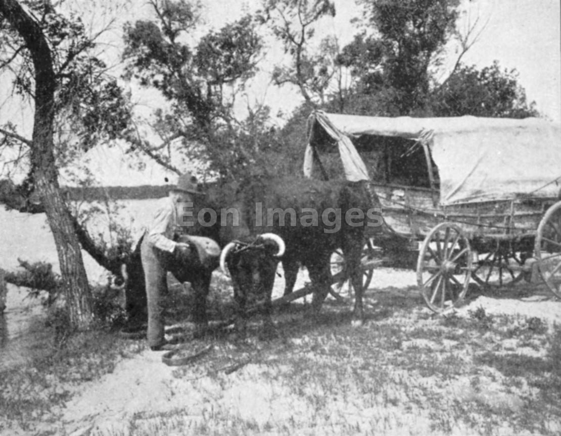 Ezra Meeker with ox-cart on second Oregon Trail trip