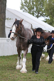HOY_220314_Clydesdales_2358