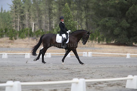 SI_Festival_of_Dressage_310115_Level_1_Champ_0695