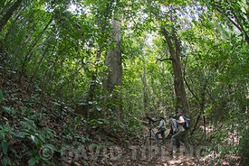 Birders looking for Golden-headed Manakin on Nando's Trail at Canopy Camp in the Darién Panama