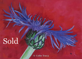 Perennial_Cornflower_-_Oil_copy