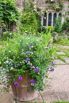 Planter on the terrace at Cothay Manor, Somerset filled with a frothy mix of verbenas, sweetpeas, Argyranthemum 'Chelsea Girl' and helichrysum