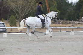 SI_Festival_of_Dressage_310115_Level_5_Champ_0820
