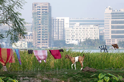 View of Salt Lake City, a planned satellite city in northeast Kolkata, India, from the East Kolkata Wetlands.