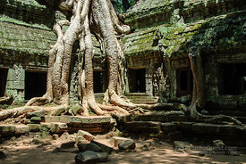 Tree Overgrowing Temple Ruins
