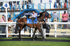 5.15pm Conditional Jockeys Handicap Steeple Chase