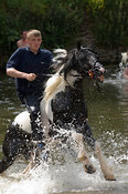 Rider on horseback coming out of River Eden at the ancient Appleby Horse Fair held each June