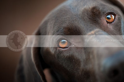 closeup of curious dog eyes with minimal background