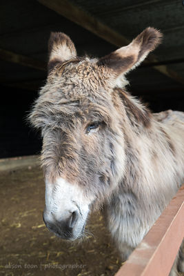 Donkey, Hillside Animal Sanctuary