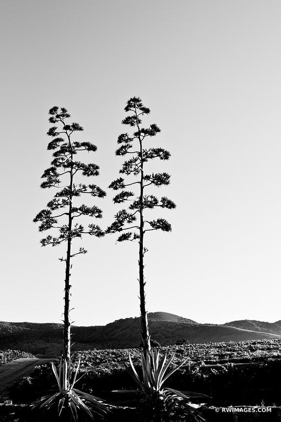 SANTA YNEZ VALLEY SANTA BARBARA COUNTY CALIFORNIA BLACK AND WHITE VERTICAL