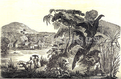 Slaves on sugar plantation