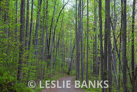 Tree lined path in Shenandoah National Park